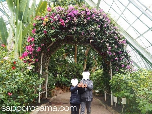 函館市熱帯植物園温室内.jpg