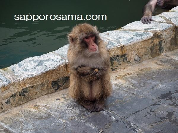 函館市熱帯植物園猿山の猿寒そう.jpg